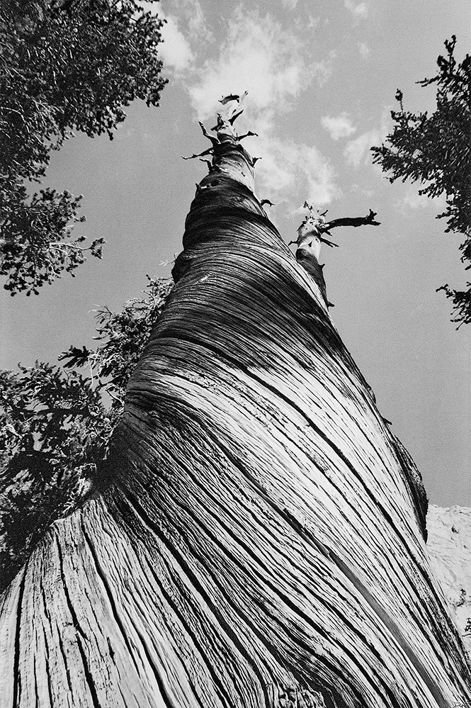 "Diana Harding-Tucker, ""Time and the Wind"", 15.5"" x 22.75"", Black and White fibre gelatin print, $2500"