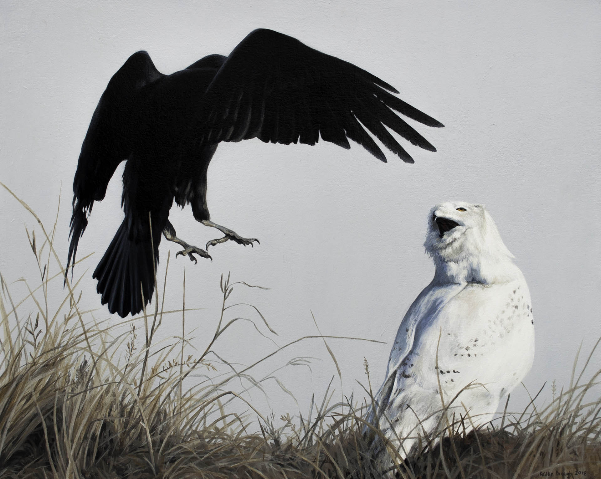"""Kaitlin Brough, """"Conflict. Snowy Owl and Common Raven"""", Acrylic on Pine Board, 20""""x 16:, $750"""